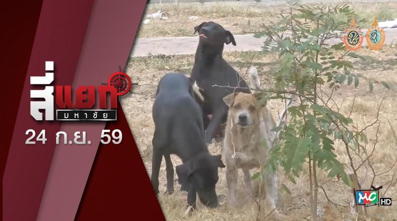สี่แยก 24-9-59 พิษสุนัขบ้า