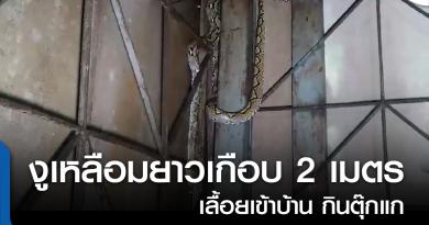 s-งูเหลือม-01