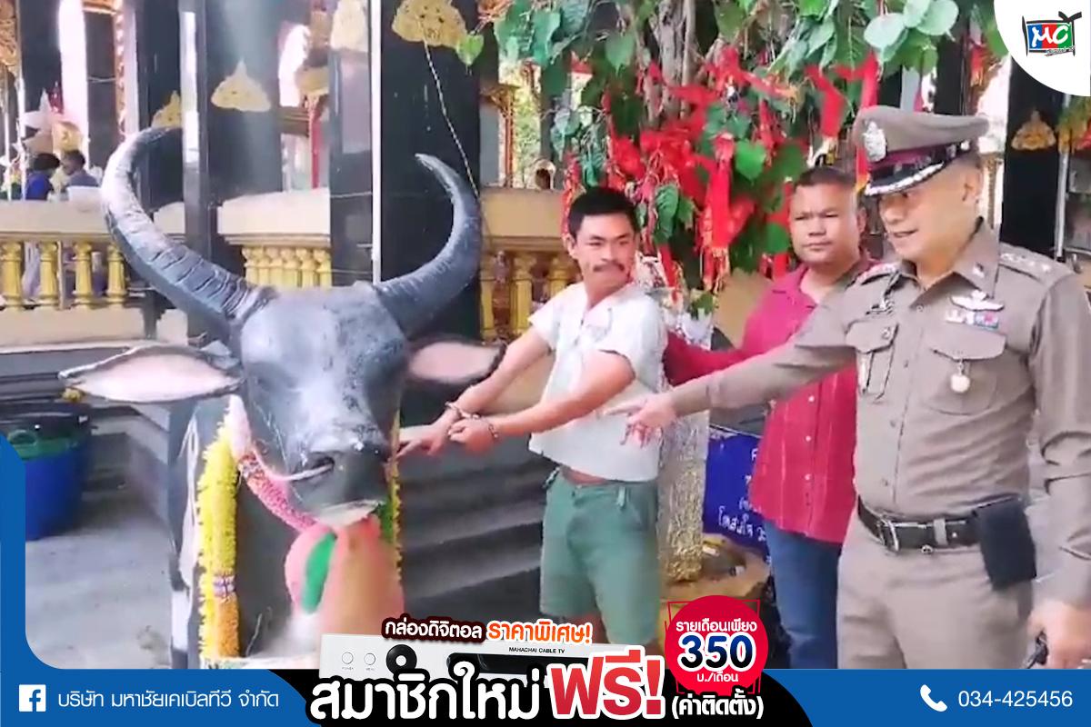 tp-ทุบวัว2