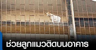 s-ช่วยแมว-01